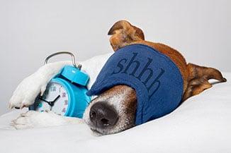 pets-good-nigh-rest